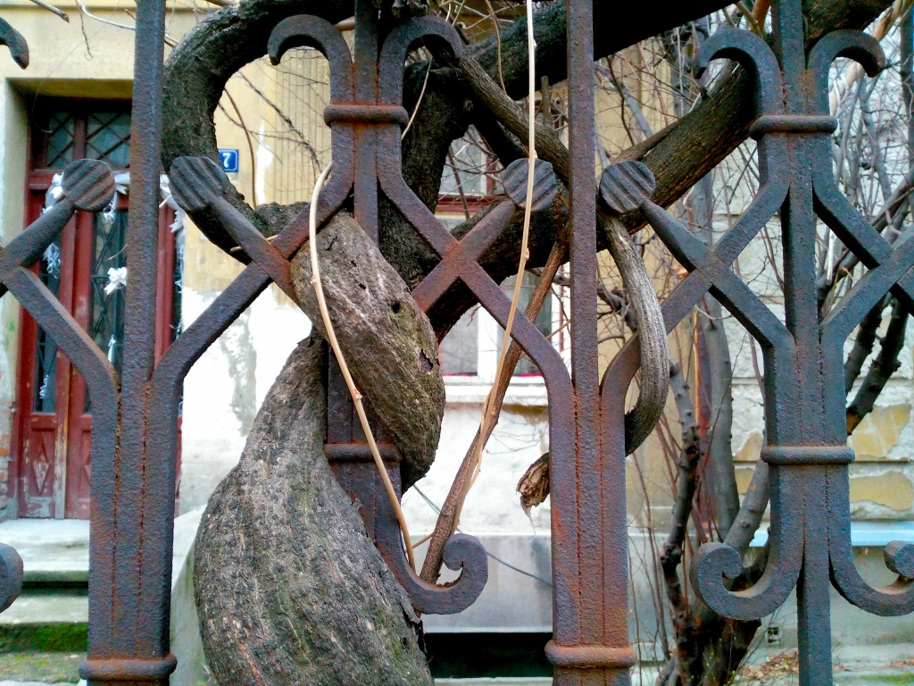 Tree branches entwined with railings